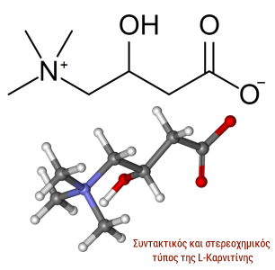 καρνιτίνη, l-carnitine